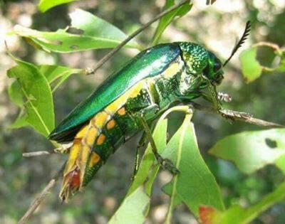 แมลงตัวนี้เขาเรียกว่าอะไร