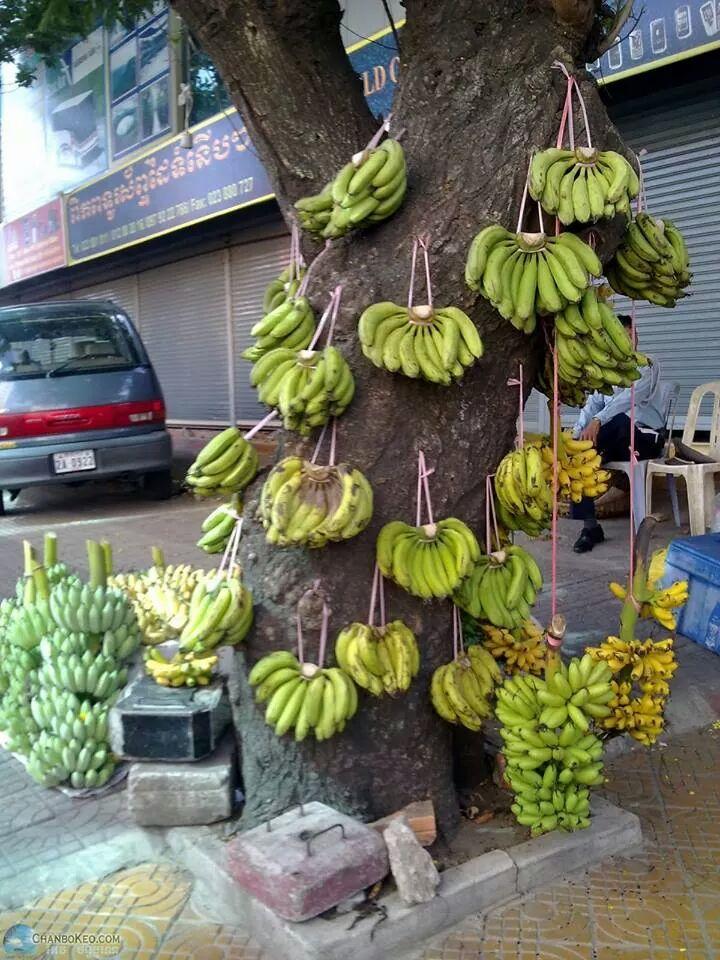 ចេកអំបូង-กล้วยหอม ภาษาเขมรวันละคำ