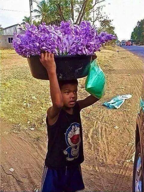 ផ្កាកំប្លោក-ดอกผักตบชวา ภาษาเขมรวันละคำ រៀនភាសាថៃ
