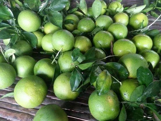 ក្រូចពោធិសាត់-ส้มเขียวหวาน ภาษาเขมรวันละคำ រៀនភាសាថៃ