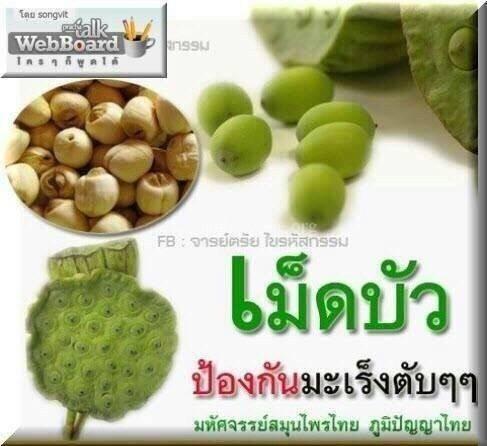 ความเหมือนที่แตกต่าง……เม็ดบัวไทย-จีน